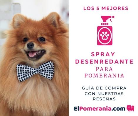 Los 5 mejores spray desenredantes para perros de raza Pomerania