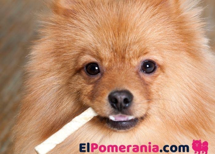 Bocadillos saludables Pomerania