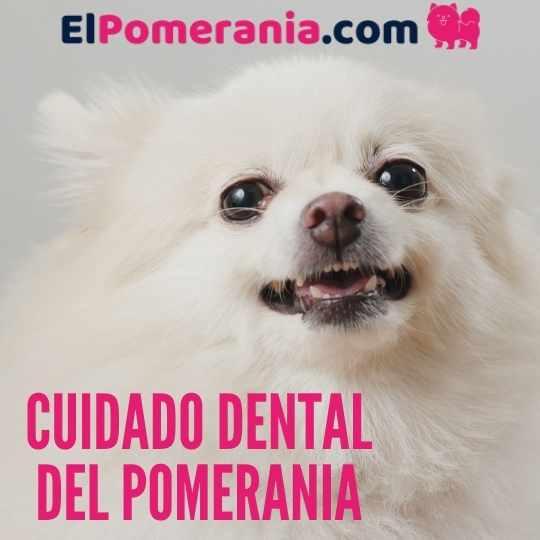 cuidado dental del pomerania