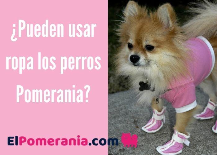 ¿Pueden usar ropa los perros Pomerania?