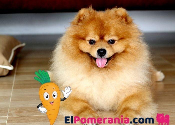 10 alternativas saludables de snack crudo para perros pequeños