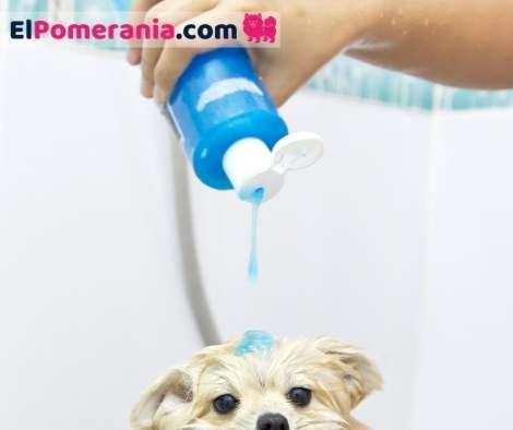 Los mejores shampoo para perros pomerania