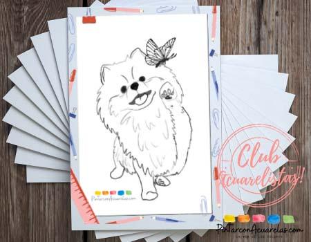 Hay 5 motivos de dibujos para imprimir y colorear o pintar hermosos perros pomerania