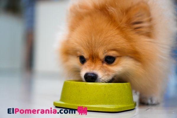 Comprar la mejor comida para perro de raza pomerania. Aquí.
