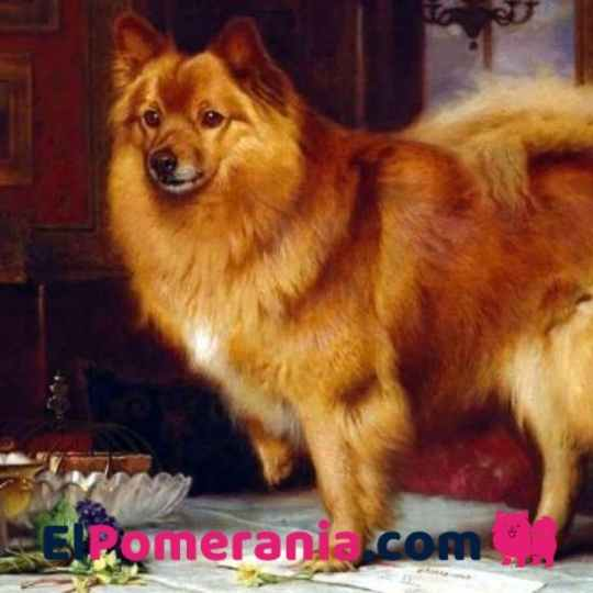 Pomeranias famosos
