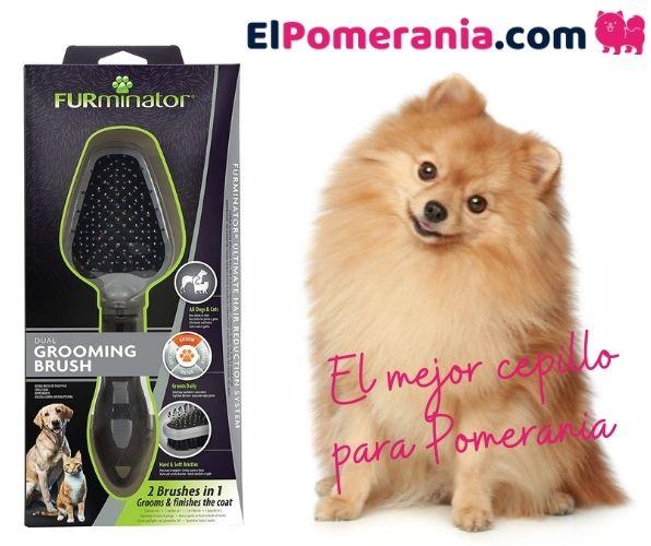 El mejor cepillo para el pelo de un Pomerania
